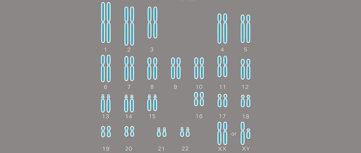 ¿Con estos cromosomas podría donar óvulos?