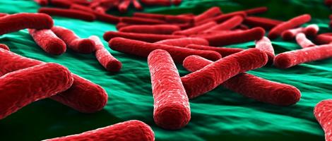 Resultado de imagen para flora bacteriana