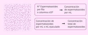 Cantidad de espermatozoides por mililitro