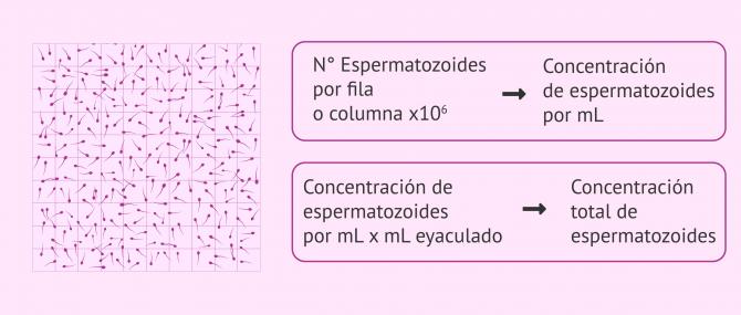 Imagen: Cantidad de espermatozoides por mililitro