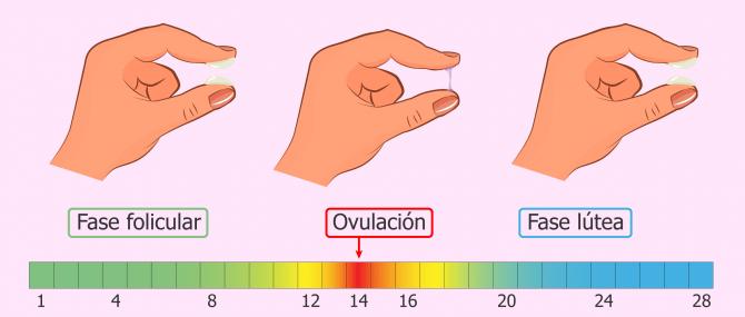 ¿Cómo es el moco cervical en el periodo fértil?