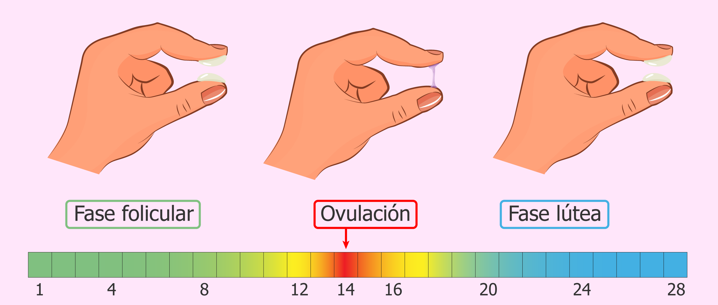 Image result for 6 síntomas que muestran que te encuentras en tu período más fértil