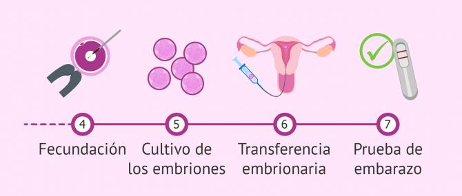 Imagen: Embarazo ectópico posible consecuencia de un proceso de fiv
