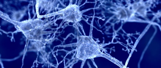 Imagen: Transmisión del impulso nervioso