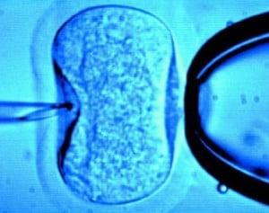 En Argentina se ha desarrollado una nueva técnica de reproducción asistida utilizando móleculas de espermatozoides apoptóticos