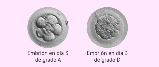 Imagen: Calidad de los embriones