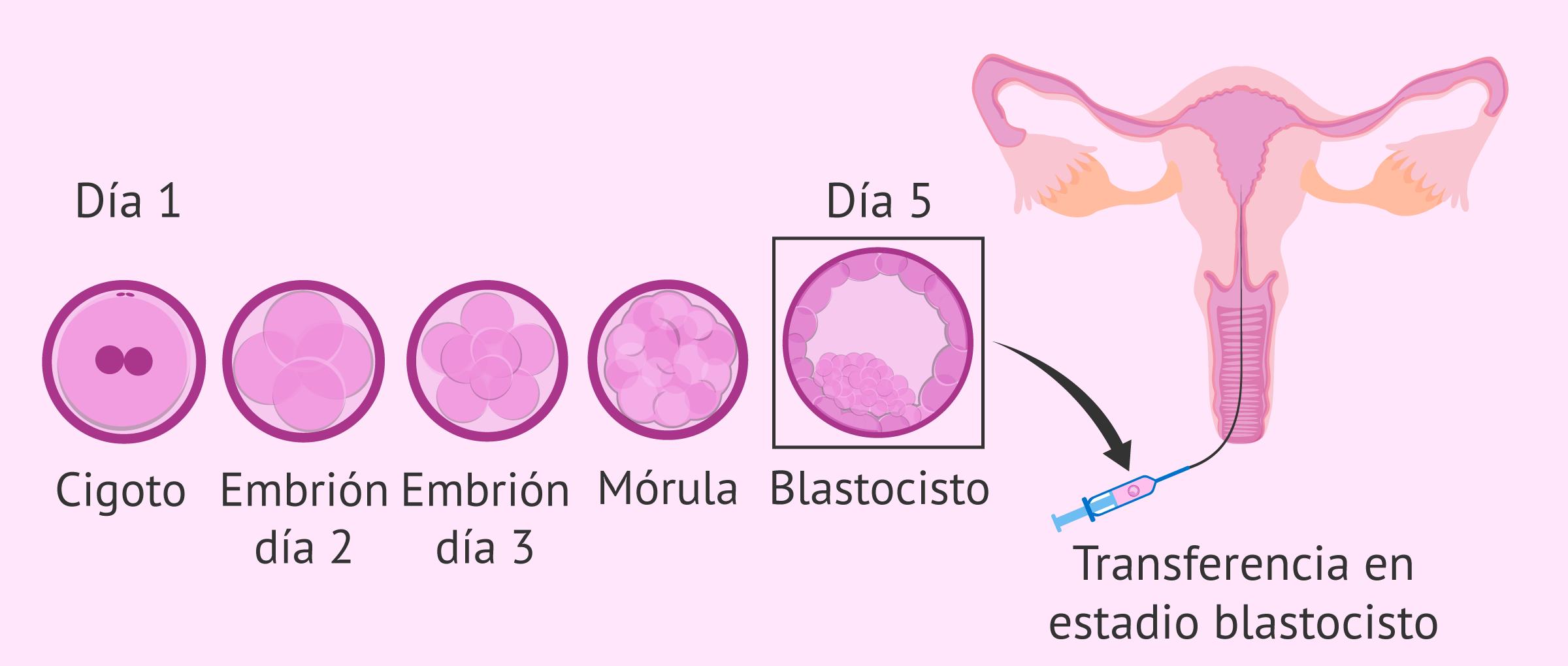 Cultivo secuencial para transferir blastocistos