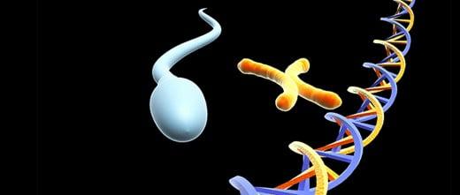 Imagen: Comparación entre espermatozoides con DNA fragmentado y normal