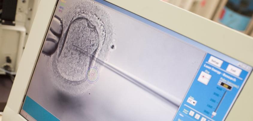 Desarrollo embrionario.
