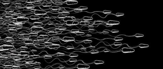 Venta de esperma por internet