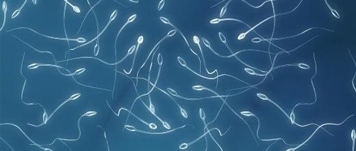 Vista de espermatozoides al microscopio