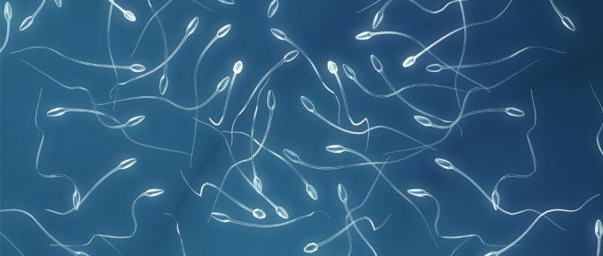 Imagen: Vista de espermatozoides al microscopio