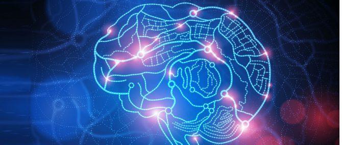 Imagen: Desarrollo cerebral
