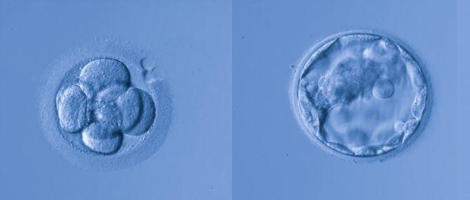 Entrevista: Adopción de embriones