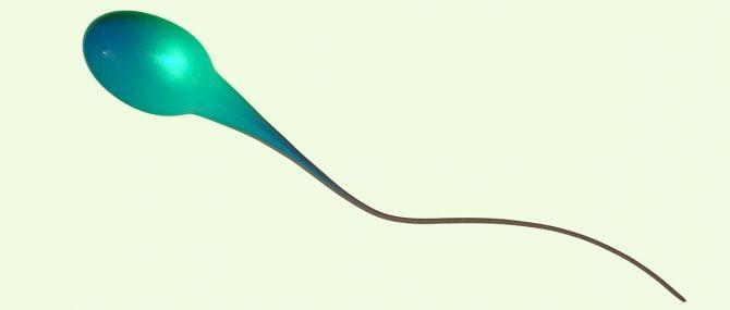 Imagen: Es la tercera y última fase del proceso de creación de esperma.
