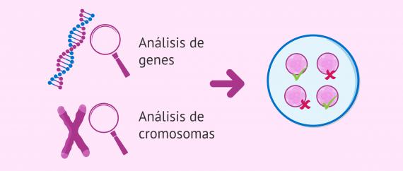 Imagen: Información genética (ADN): cromosomas y genes