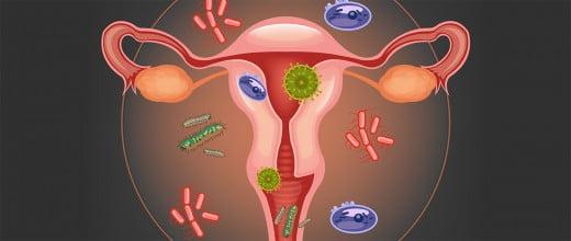 Flora microbiana vaginal