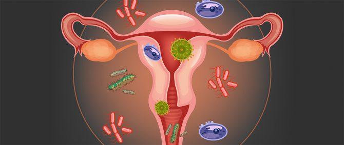 Imagen: Flora microbiana vaginal