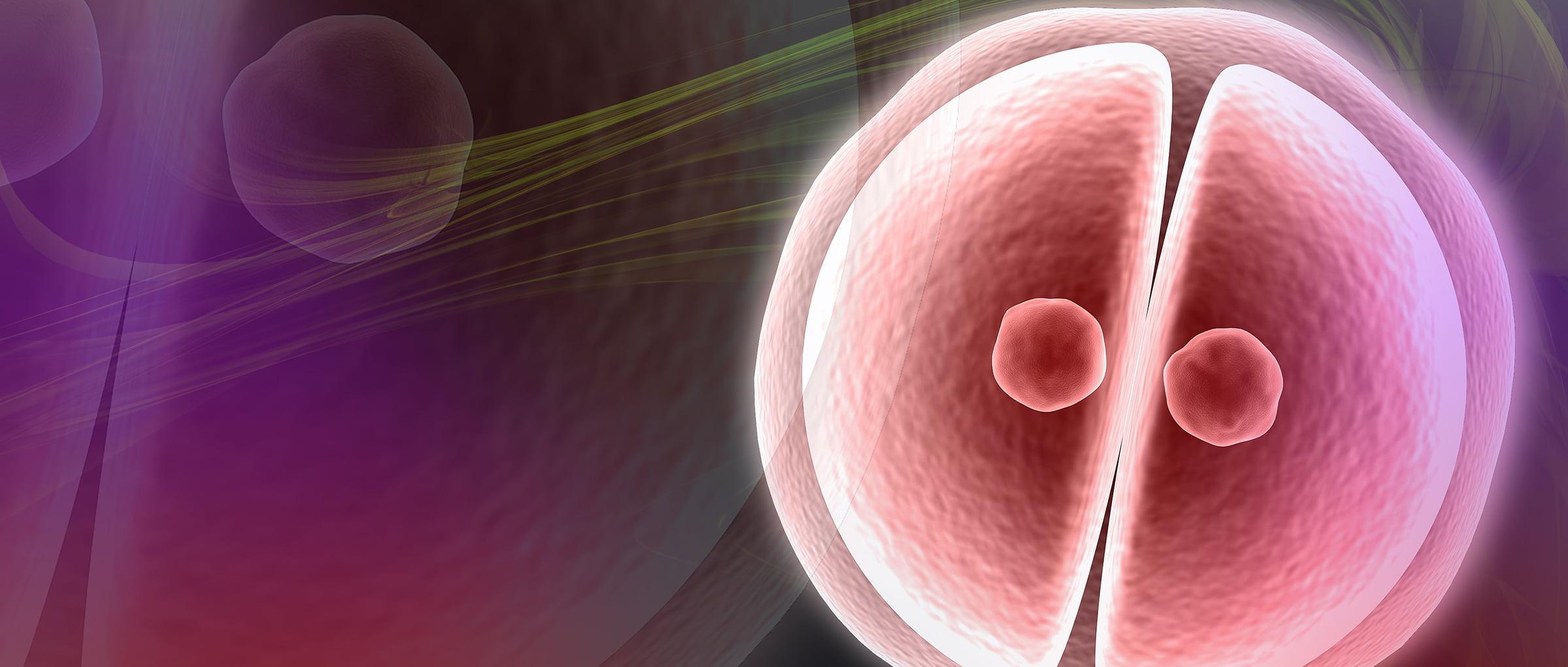 Selección de los embriones