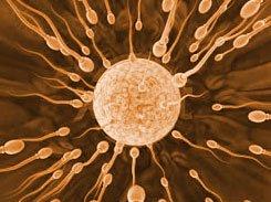 La Generalitat valenciana ha denominado a los óvulos fecundados como miembros adicionales del núcleo familiar