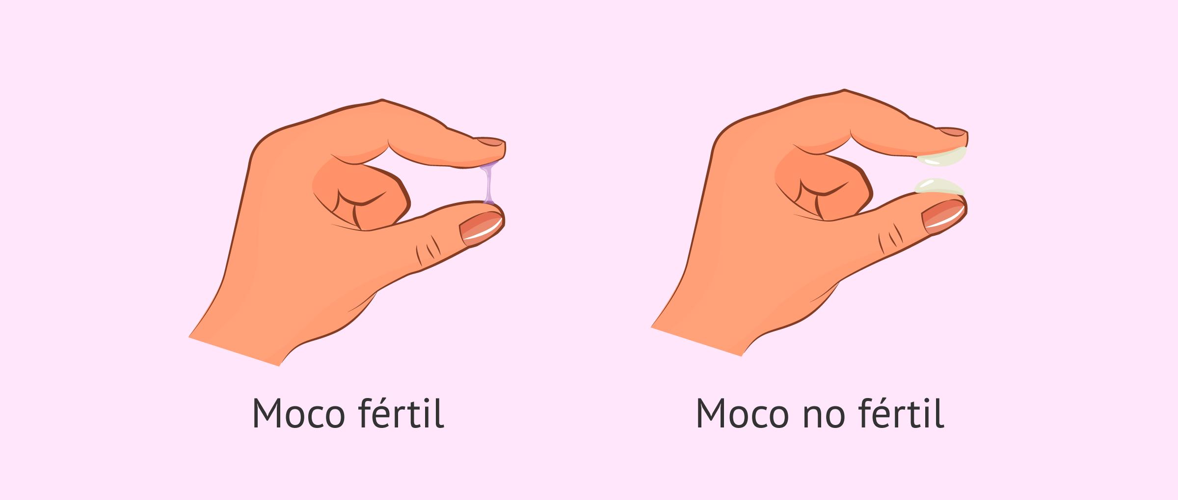 Los cambios del moco cervical durante el ciclo menstrual