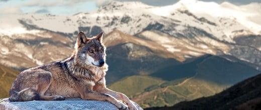 Lupercos o amigos de los lobos