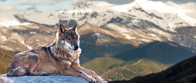 Imagen: Lupercos o amigos de los lobos
