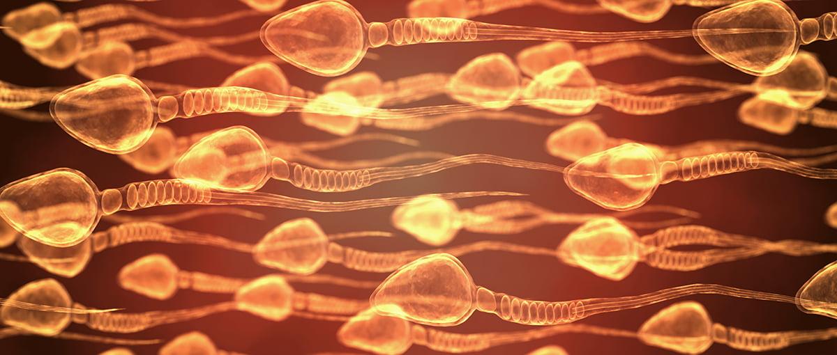 La técnica MACS aplicada a la reproducción asistida en la selección de espermatozoides