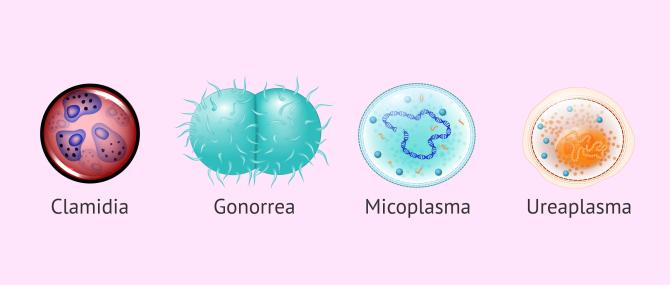 Imagen: Microorganismos que pueden causar infertilidad