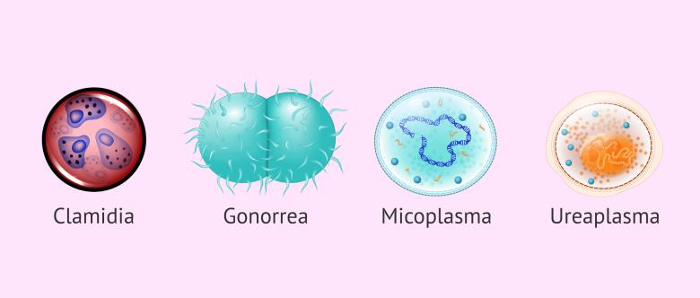 Microorganismos que pueden causar infertilidad