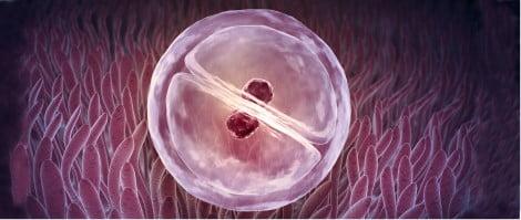 Implantación de los embriones