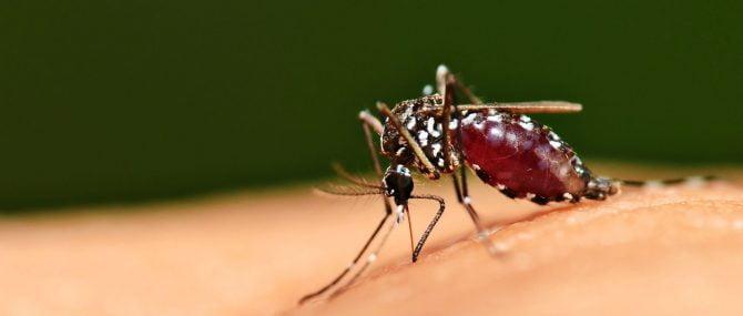Avances en la vacuna contra la malaria durante el embarazo