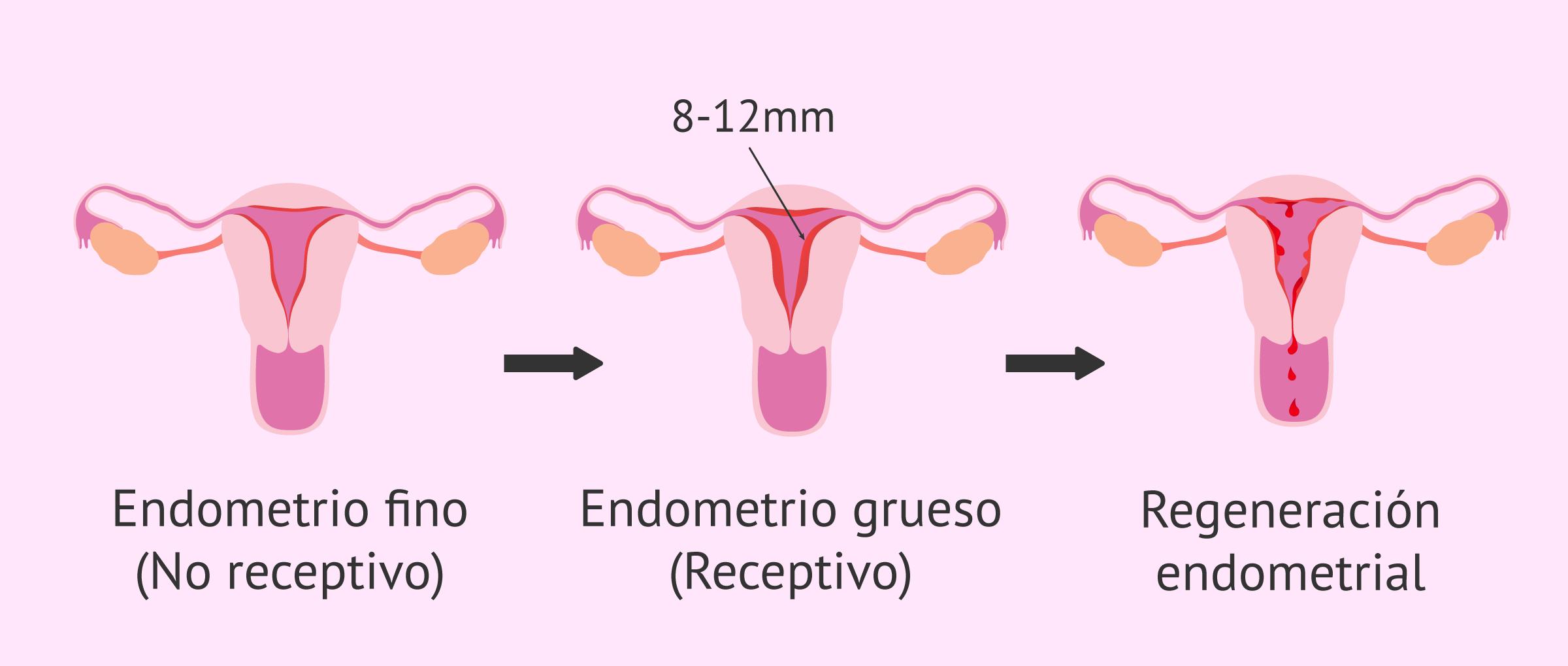 La receptividad uterina