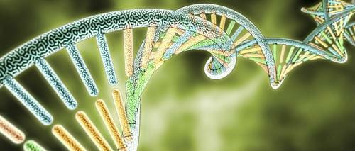 DNA recombinación