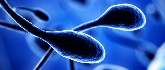 Imagen: Selección de los mejores espermatozoides