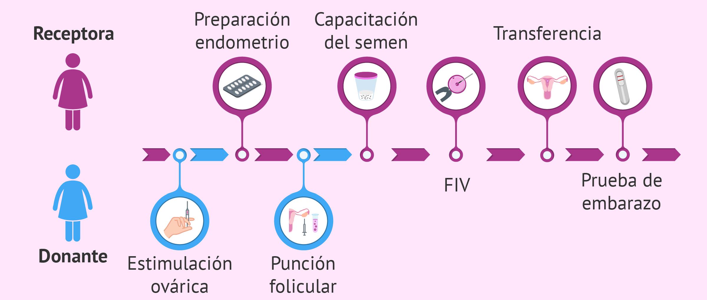 El tratamiento para la receptora de óvulos paso a paso