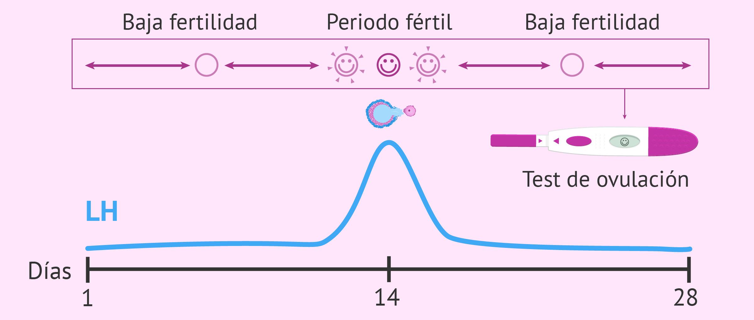 Calculadora de ovulación Cómo funciona