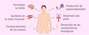 Terapia con testosterona