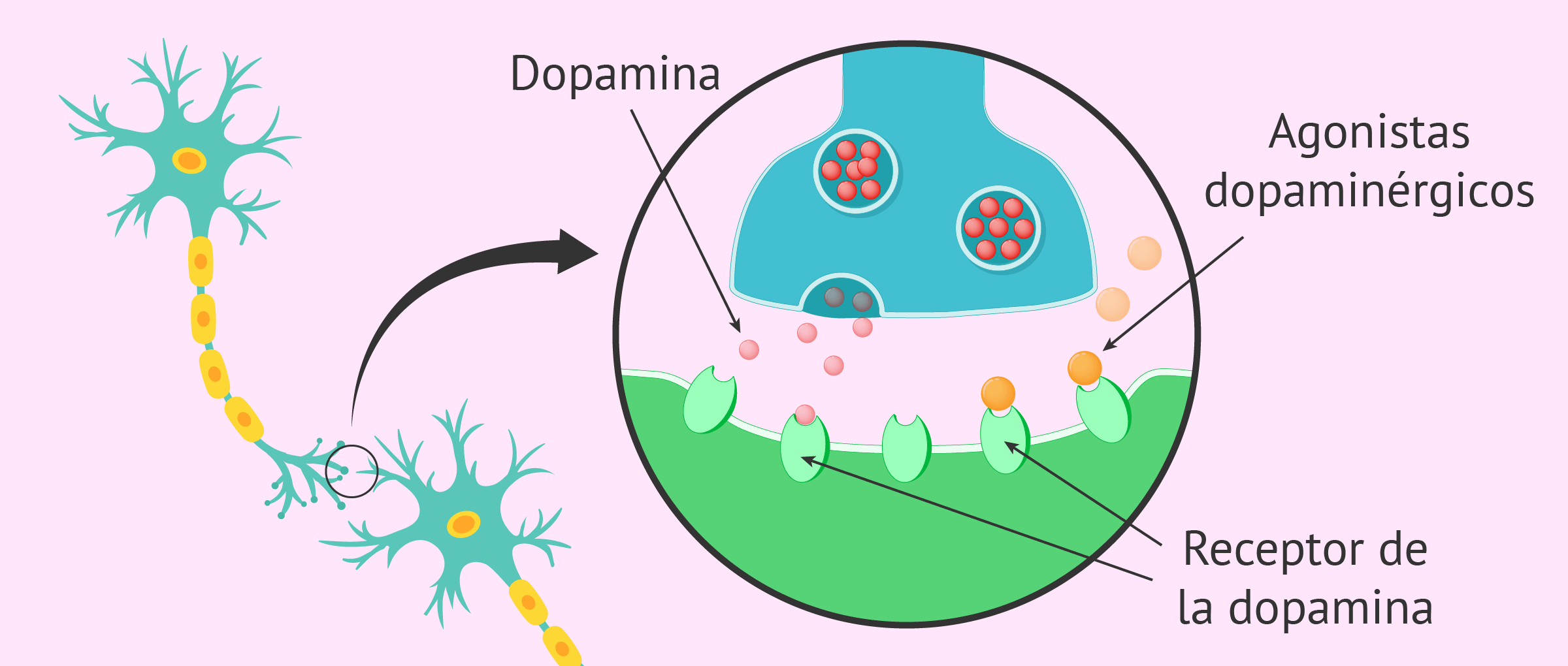 Tratamiento de la hiperprolactinemia con agonistas dopaminérgicos