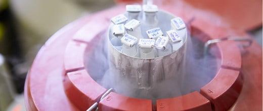 Congelación de semen