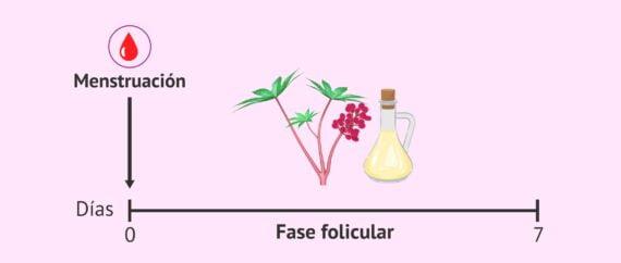 Imagen: Aceite de ricino para mejorar el endometrio