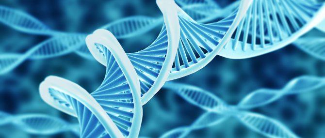 Imagen: ADN mitocondrial