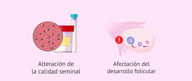 Imagen: Microbiota y gametogénesis