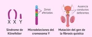 Evitar la herencia de enfermedades genéticas