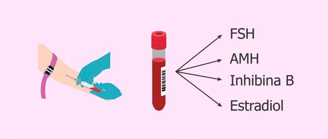 Medición de la cantidad de óvulos mediante análisis de sangre