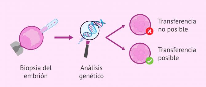 Imagen: analisis-genetico-embriones-transferencia