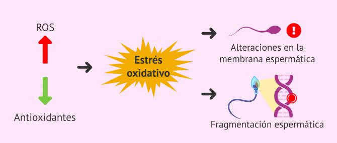 Imagen: Estrés oxidativo y aborto recurrente