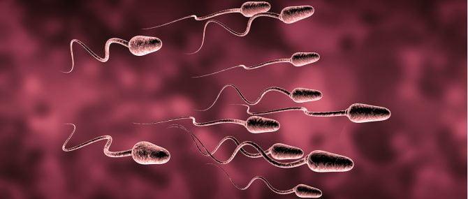 Imagen: Muerte celular programada de espermatozoides