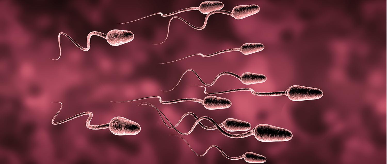 Muerte celular programada de espermatozoides