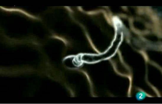 Biochip desarrollado por el IVI